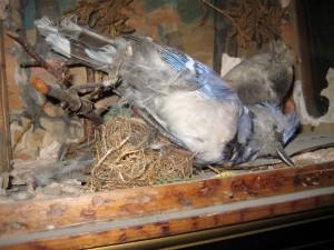 Dead Bird Envy